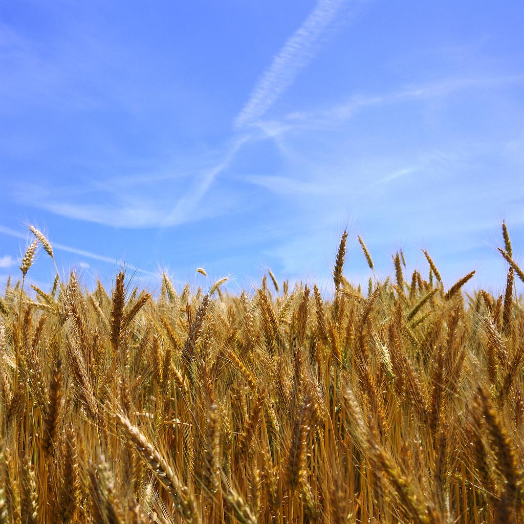 agricultural%20economics